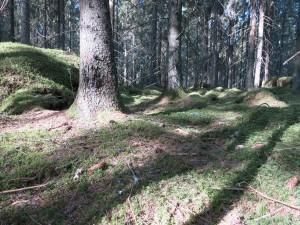 Sörmlands trollskog